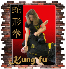 How to learn kung fu at home video